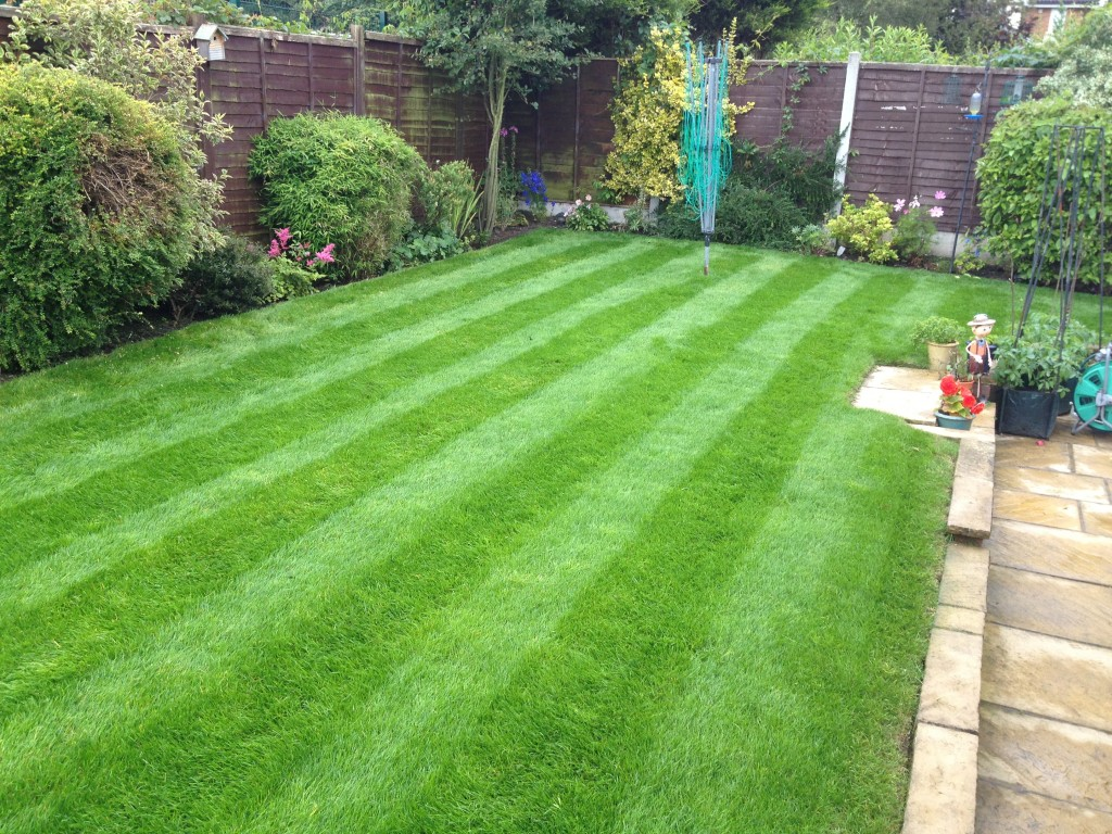 Another garden well maintained by Dynamic Home Improvements Ltd